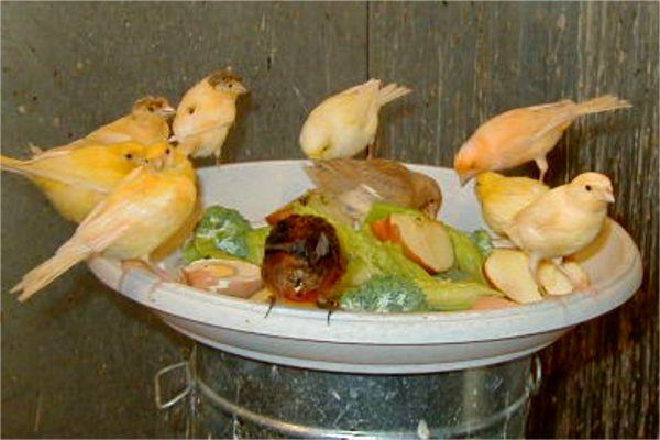 Καλή όρεξη. Μαρουλάκι, μήλο μπρόκολο και αυγουλάκια φρέσκα για τα αρχηγόπουλα.